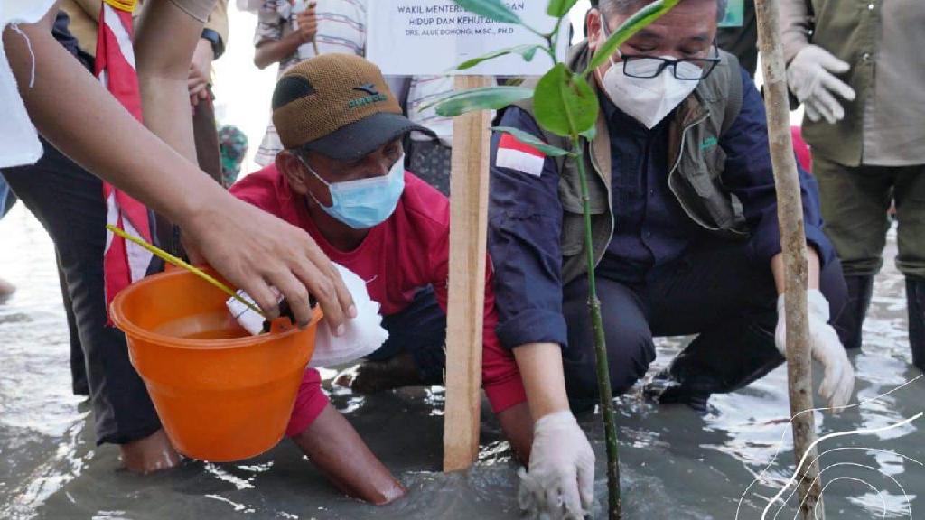 Wamen LHK Tinjau Langsung Program Padat Karya Penanaman Mangrove di Sulawesi Tenggara