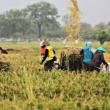 Dorong Penguatan Ekonomi Pedesaan Menciptakan Kemandirian Desa