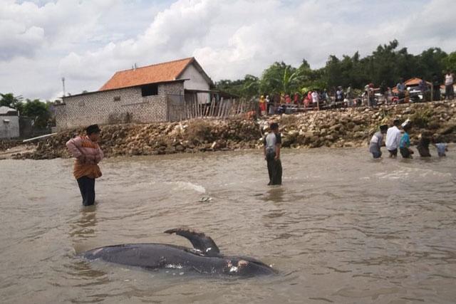 ikan-paus-termpar-di-pinggir-pantai