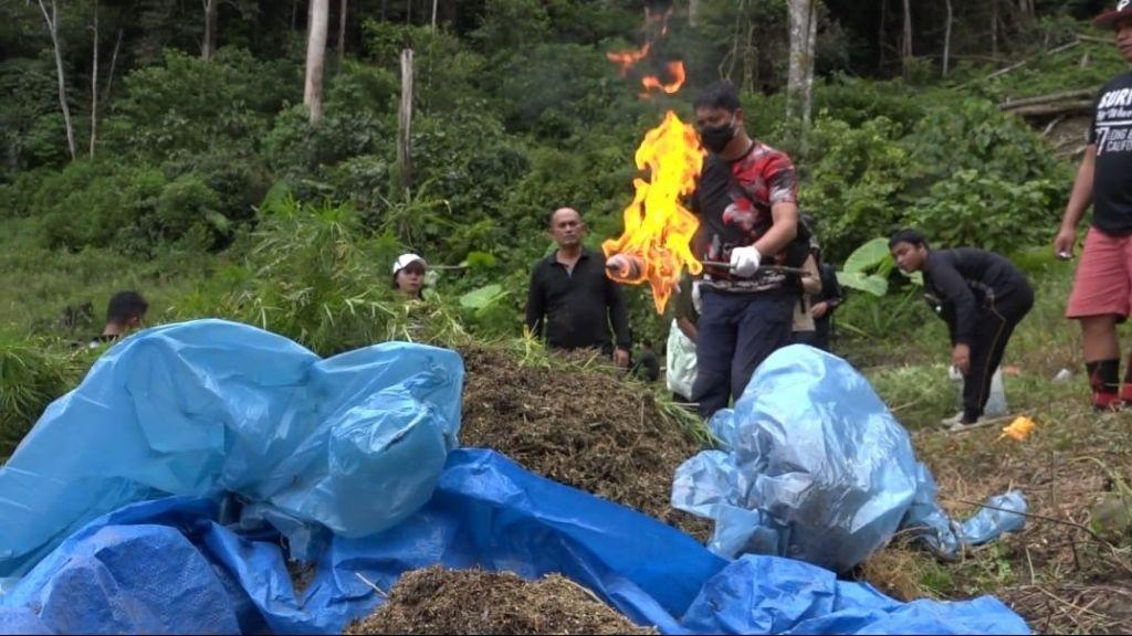 Satres Narkoba Polres Jakbar Musnahkan Belasan Hektar Ladang Ganja